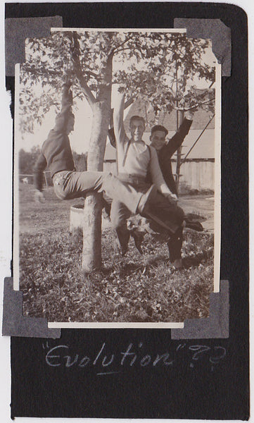 vintage snapshot 3 men hanging from the branches of a tree