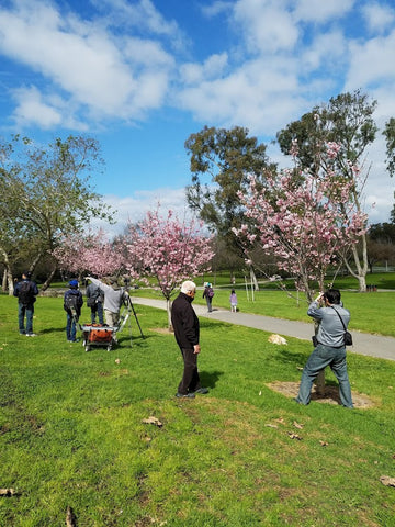 Huntington Beach Central Park Cherry Blossom 2017