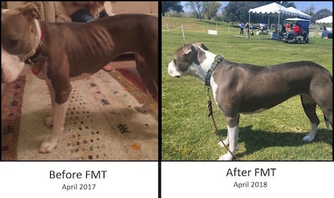 Emmy before fecal microbiota transplant (FMT) and after
