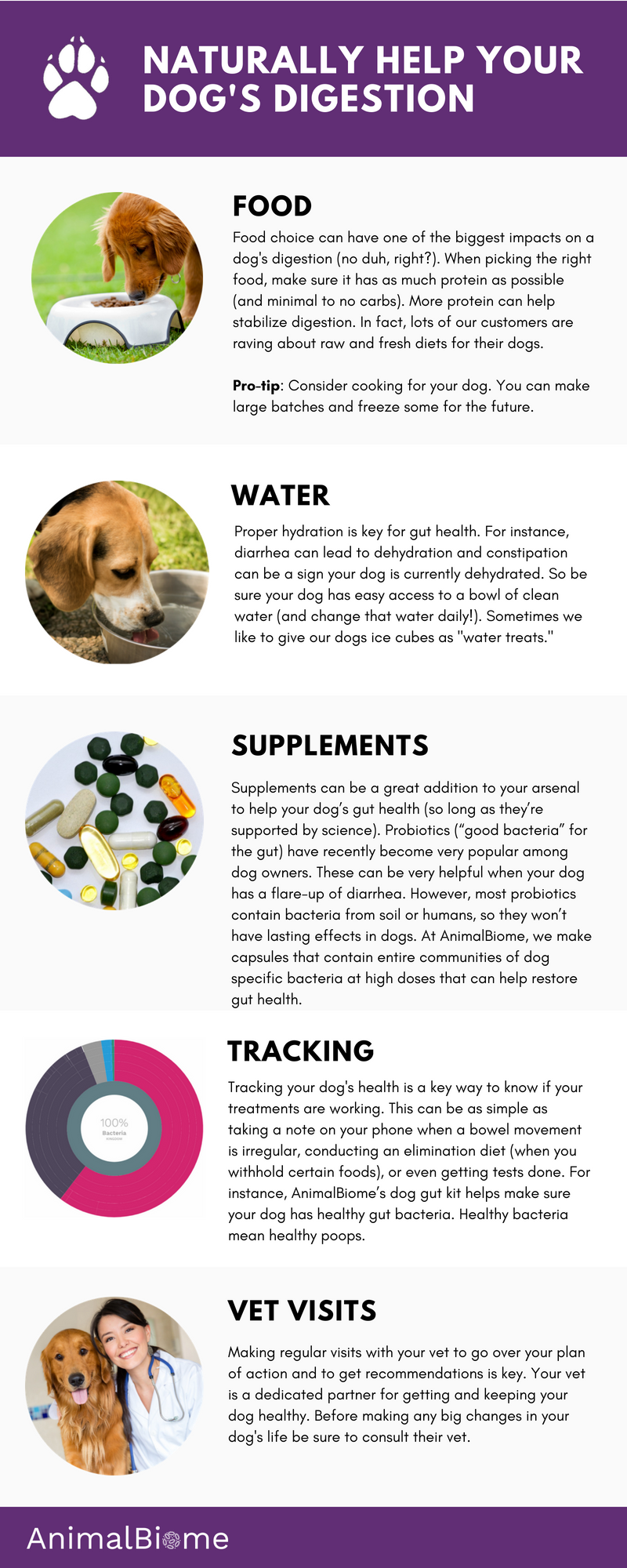 Naturally balancing a dog's digestion - tips in infographic format.