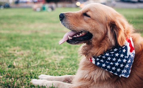 9 Tips to Help Your Pet Cope on the 4th of July