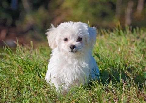 Diarrhea in Puppies: The Scoop on Dog Poop