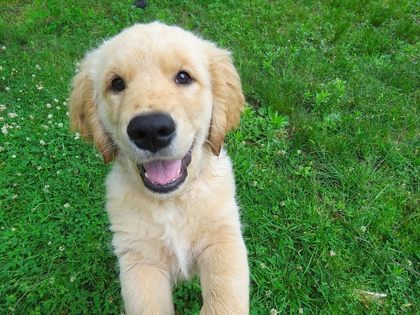 Gut Bacteria - The Secret to Your Dog's Health
