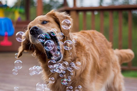 Healthy Dog Playing with Bubbles