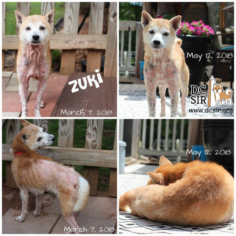 Zuki's skin and coat transformation with FMT