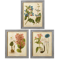 Framed Flower Wall Art