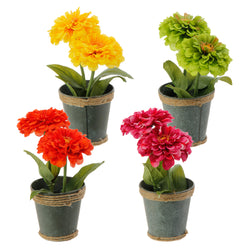 Potted Zinnia