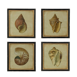Framed Shell Print