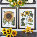 "24"" Sunflower Framed Print"