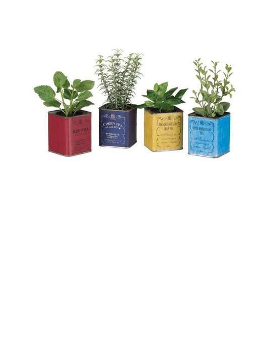 Potted Herb in Tin