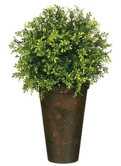 Tealeaf Berry Botanical Potted Plant, Large