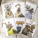 Song Birds, Boxed Cards