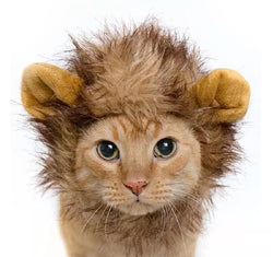 Buy Lion Mane Costume