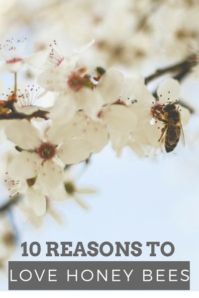 10 Reasons to Love Honey Bees