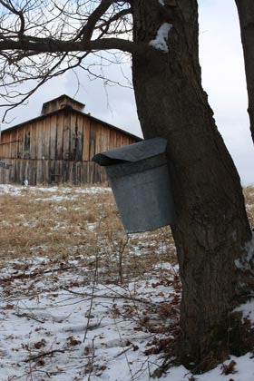 2021 Maple Season Sugarhouse Hours: 10-3, March 20, 21, 27, 28. Sorry, no breakfast - watch and shop only. CALL TO SCHEDULE TOUR.