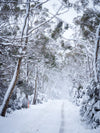 Cradle Mountain Winter Workshop - August 6th to August 10th 2021 - SOLD OUT!!