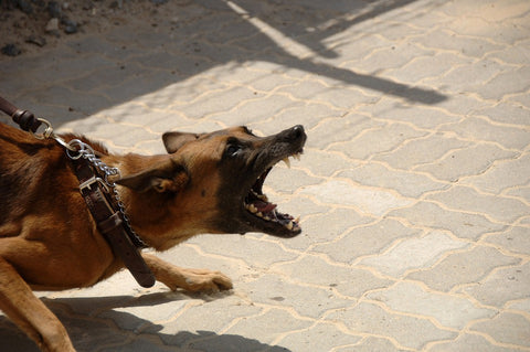 Preventing and Addressing Dog Aggression