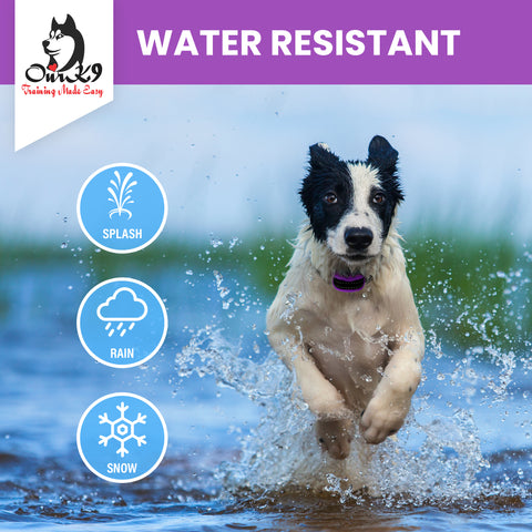 Dog Running in The Water Wearing a Water Resistant Our K9 Training Made Easy Dog Shock Collar