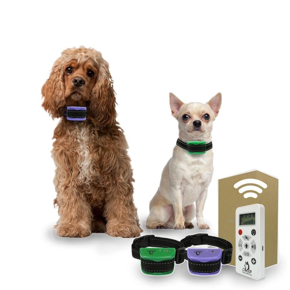 Not One Dog Training Collar but Two for Small Dogs, 800 Yard Range