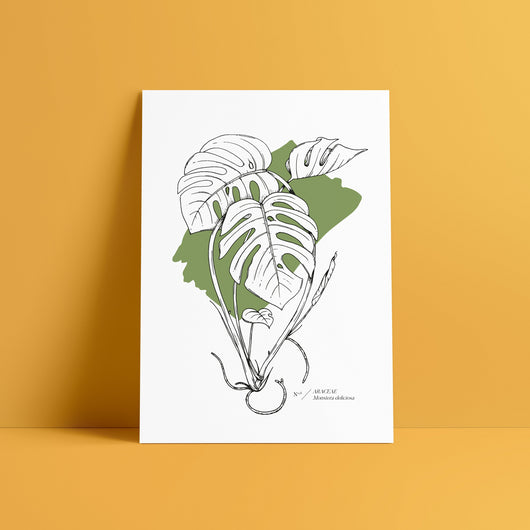 Monstera deliciosa Abstract