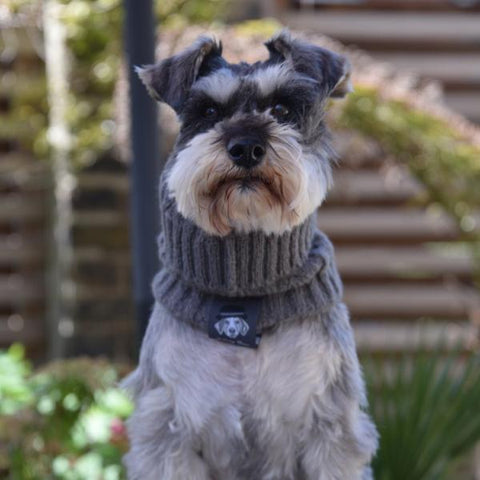 Dog Snood - Grey