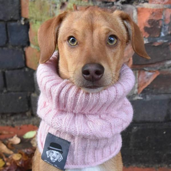 **LIMITED EDITION** Dog Snood - Blush Pink