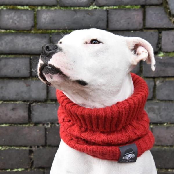 Dog Snood - Ruby's Red