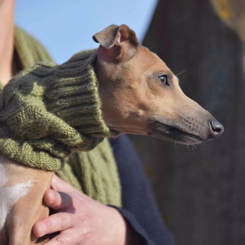 Dog Snood - Olive
