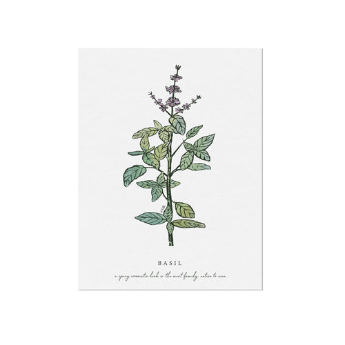 Basil Herb Illustration by November Fields