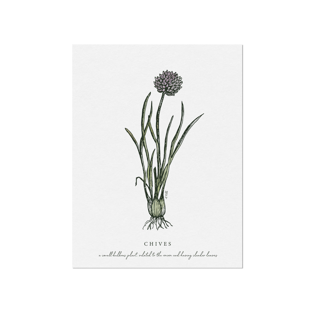 Chives Herb Illustration by November Fields