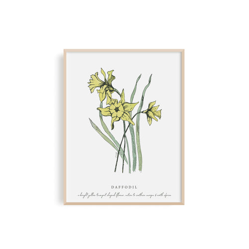 Daffodil Floral Illustration