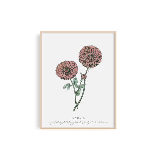 Dahlia Floral Illustration