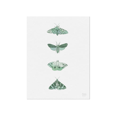 Four Moths Insect Art Print