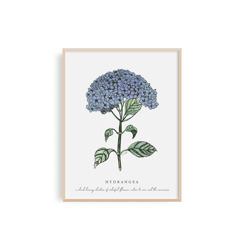 Hydrangea Floral Illustration