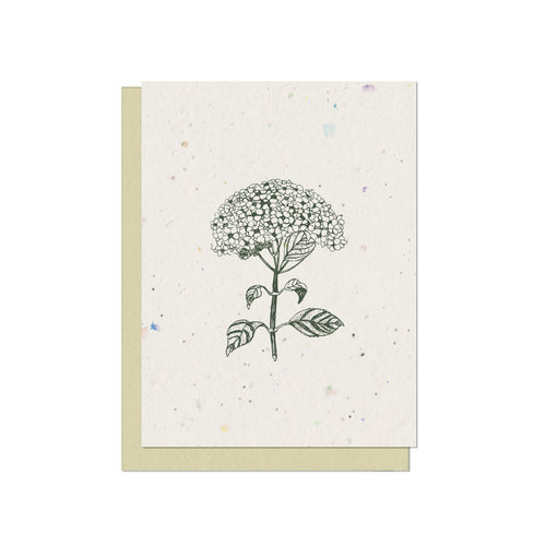 Discounted Hydrangea Plantable Blank Card