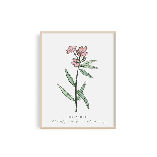 Oleander Floral Illustration