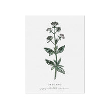 Oregano Herb Illustration by November Fields