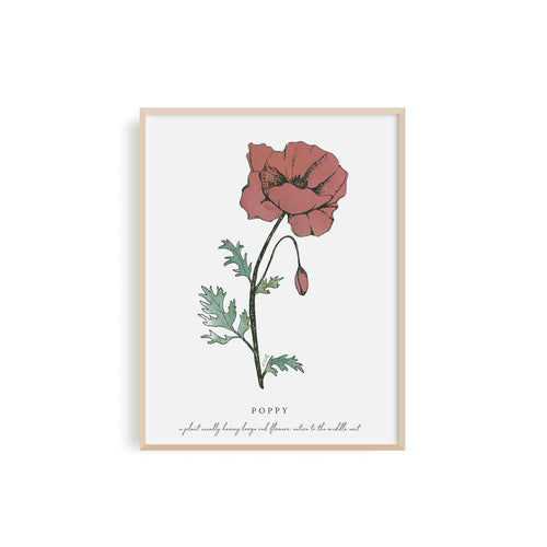 Poppy Floral Illustration