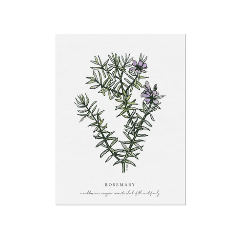 Rosemary Herb Illustration Art Print