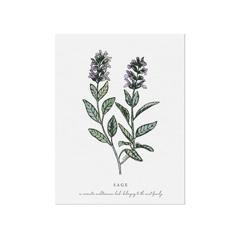 Sage Herb Illustration by November Fields