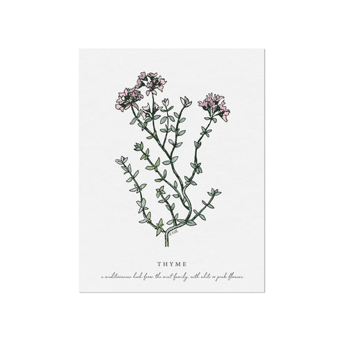 Thyme Herb Illustration by November Fields