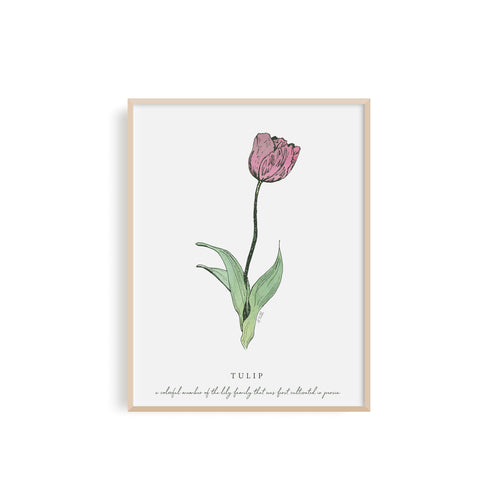 Tulips Floral Illustration