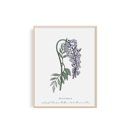 Wisteria Floral Illustration