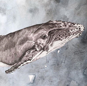 """Moby Dick"" Whale Illustration"