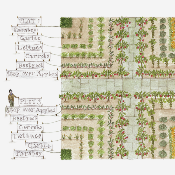 'French Diagonal Plot' Gardening Card