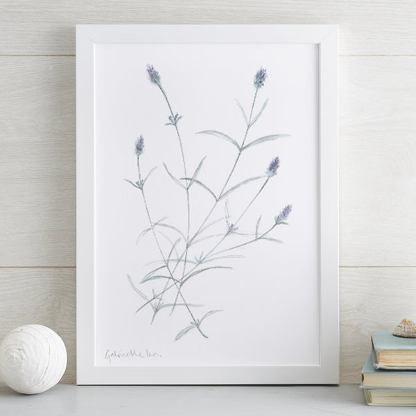 Lavender Munstead Original Painting (colour)