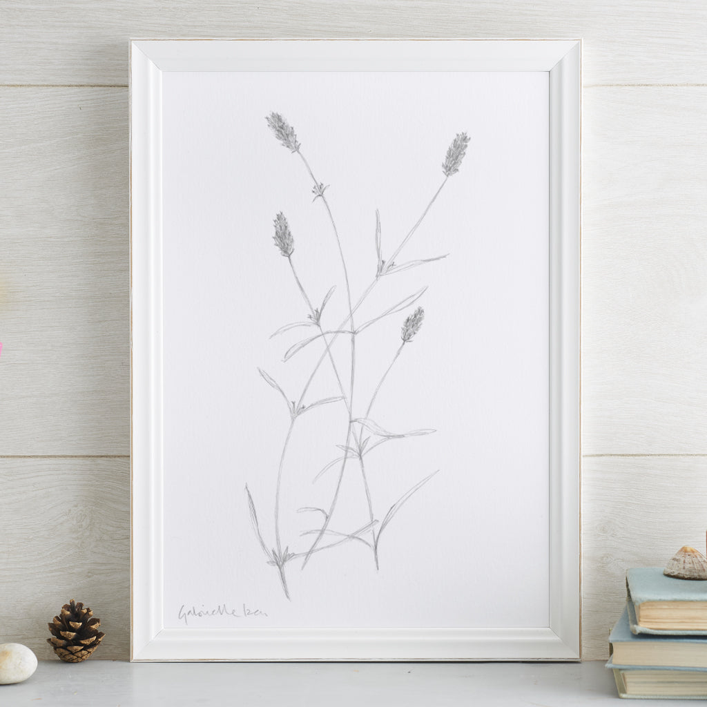'Lavender Munstead' Flower Portrait Art Print (pencil)