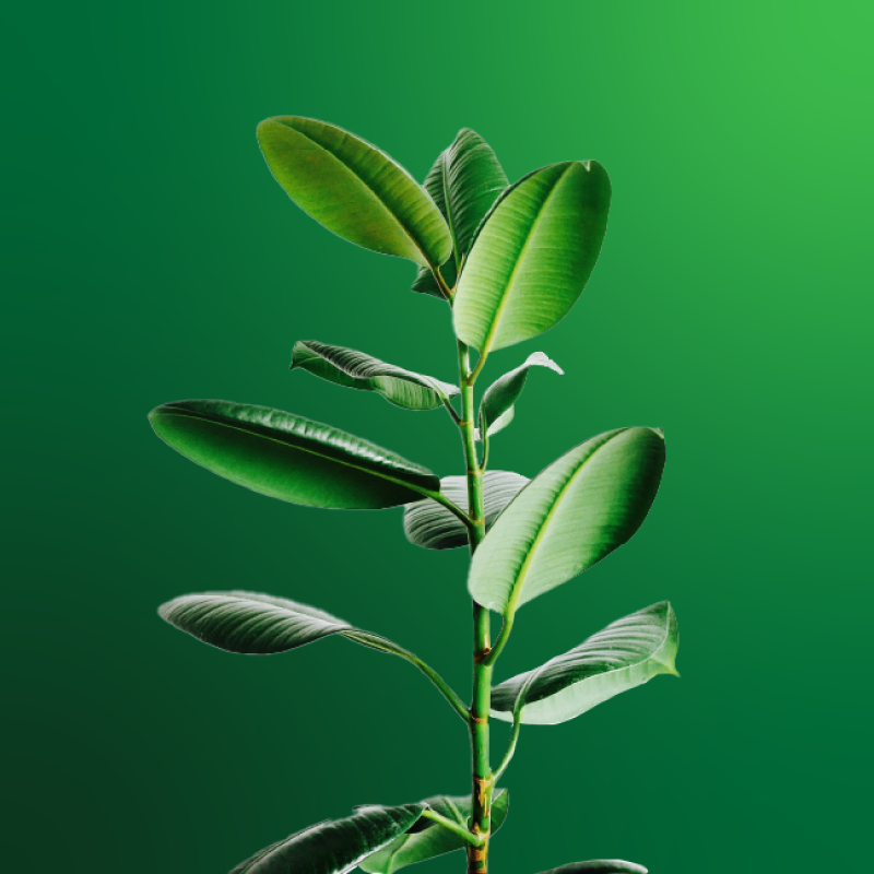 houseplant on a green background