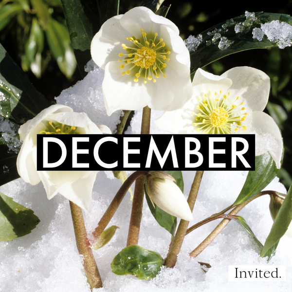 Invited Blooms: 2021 Monthly Flower Box Subscription
