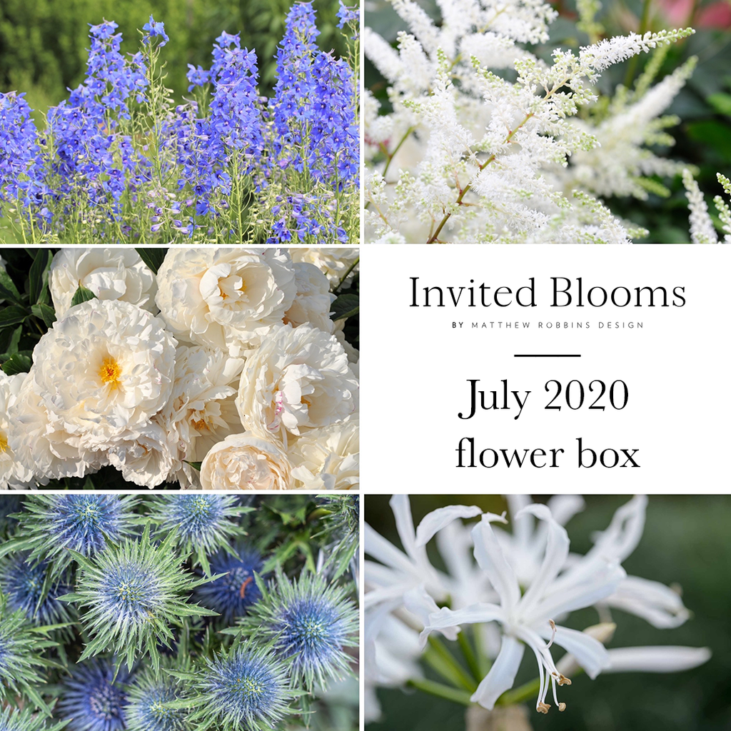 Invited Blooms: July 2020 Summer Blues & Whites